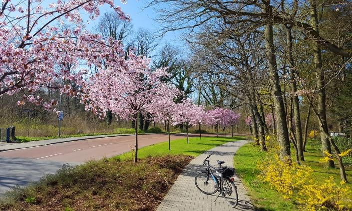 Henner-Hinz-Fahrradverleih-Strandkoerbe-Hafkrug-Ostsee-Radtour-Niendorf